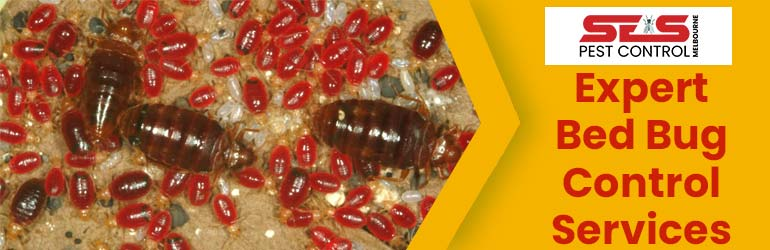 Expert Bed Bug Pest Control Services