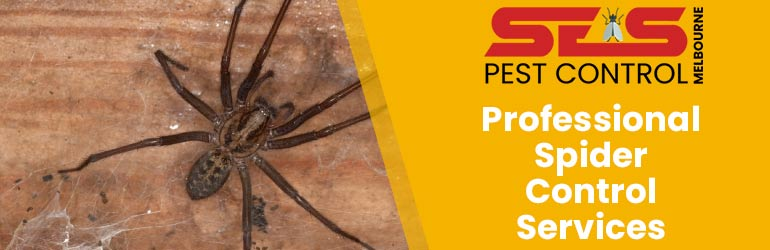 Professional Spider Control Services