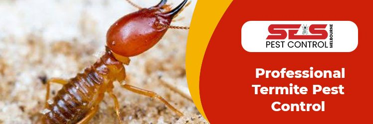 Tips to Get Rid of Termite from your Home