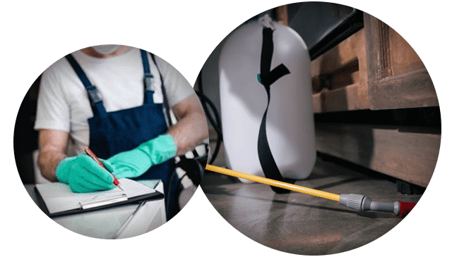 End of Lease Pest Control Melbourne