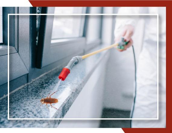 Pest Control Bundoora